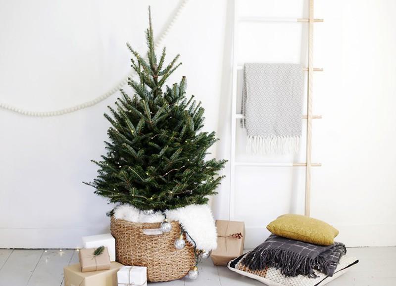 Met deze tips blijft je kerstboom langer mooi