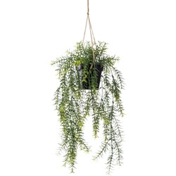 Cozy Ibiza - hangplant Asparagus 2 stuks