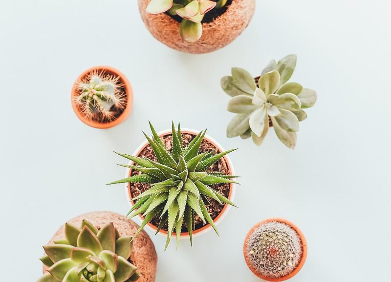 20x de leukste cadeautjes voor plantenliefhebbers