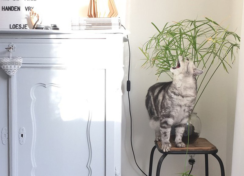 Deze 5 populaire kamerplanten zijn volledig veilig voor jouw huisdier