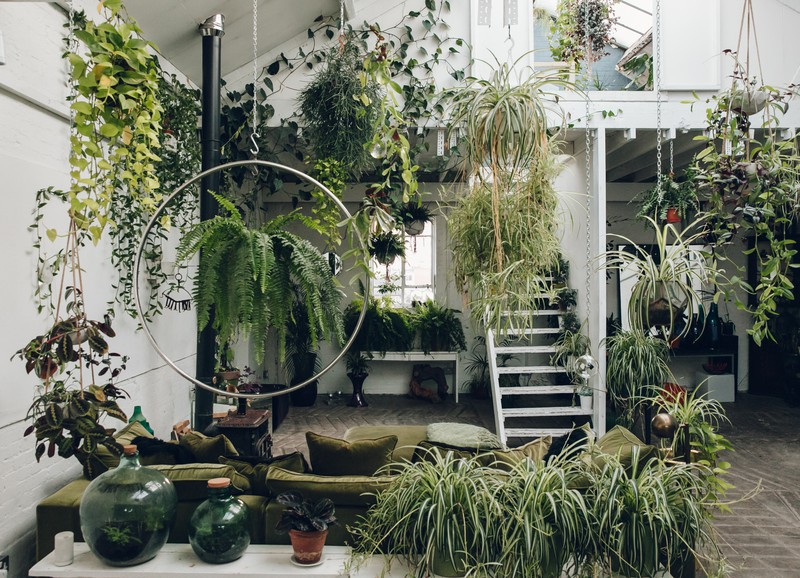 Wow! Zo veel kamerplanten zuiveren de lucht pas écht