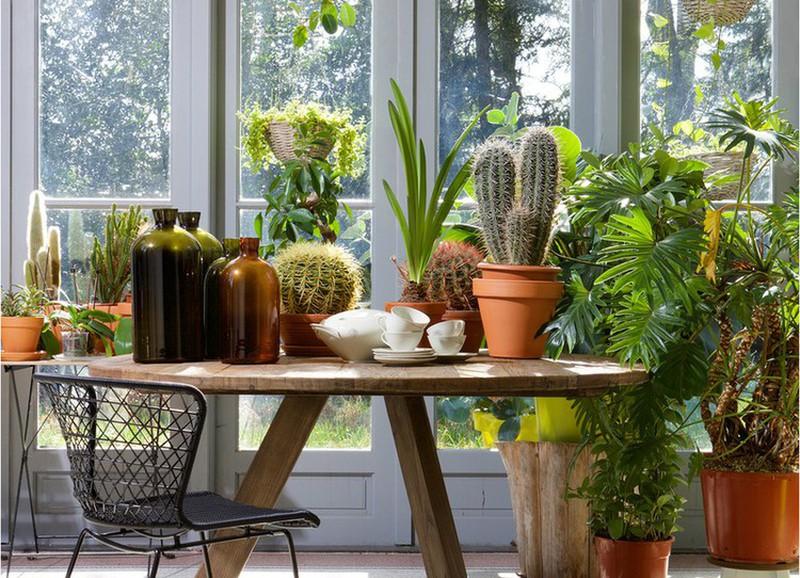 7 tips om je kamerplanten optimaal te verzorgen