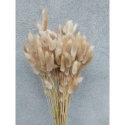 Bries aan Zee Droogbloemen - Gedroogde Hazenstaart - Lagurus Ovatus - Lagurus Ovatus