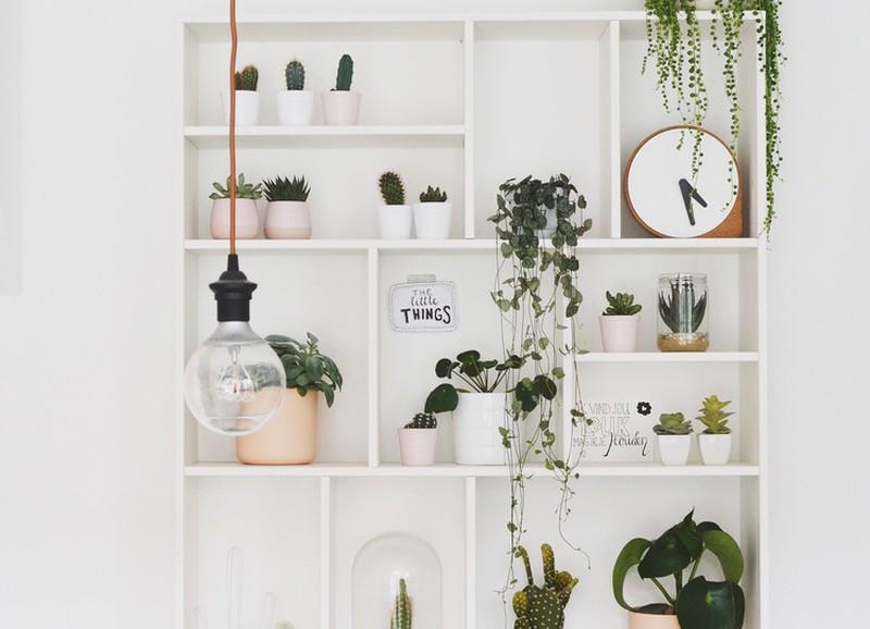 5 manieren om je kamerplanten te stylen