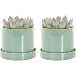 Echeveria incl. 'light green' pot - set van 2