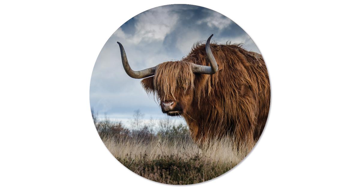 Muurcirkel klein buffel - Ø 30 cm