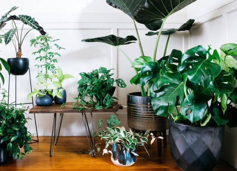 Dit zijn de beste luchtzuiverende planten