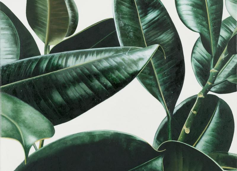 Deze kamerplanten zijn onmisbaar in een gezond huis