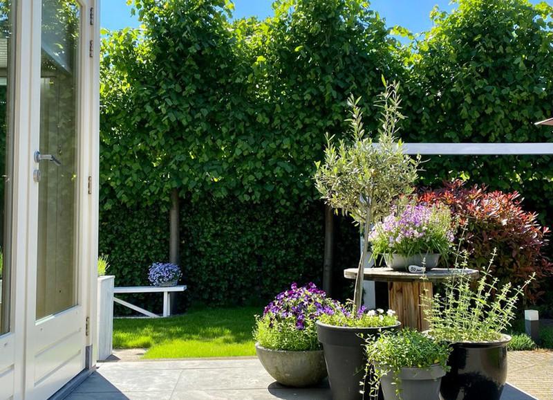 Hoe de standplaats jouw (tuin)planten beïnvloedt