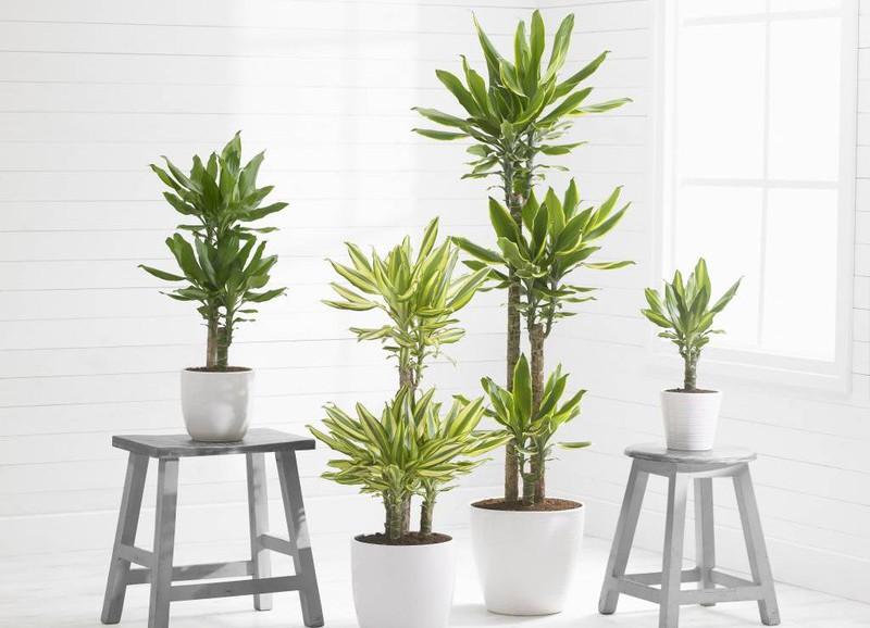Wist jij dat je planten elkaar moeten aanraken?