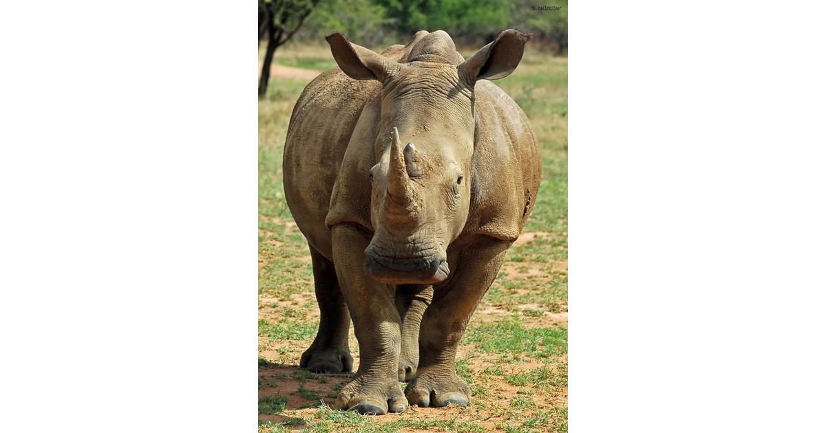 2 stuks Tuinschilderij Rhino 50x70 cm