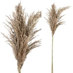 Dried Leaves - 40.0 x 12.0 x 100.0 cm